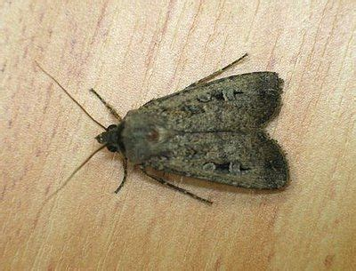 how to get rid of moths in bathroom 11 best images about clothing moth diy on pinterest baby