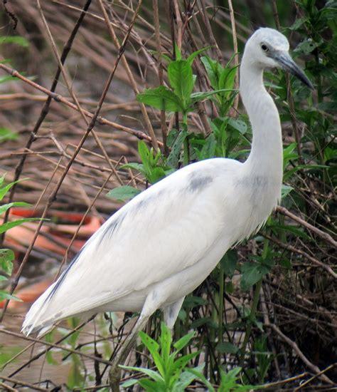 finderne wetlands birding nj audubon ebird