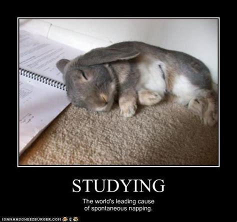 Funny Study Memes - rabbit ramblings january 2013