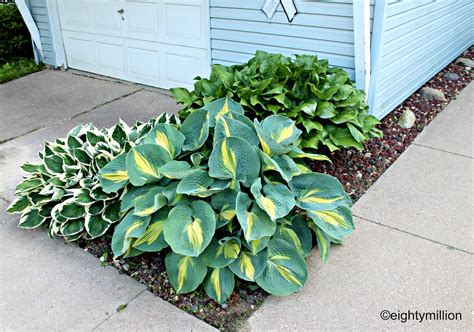 hosta garden ideas diy landscaping tips ideas hosta plants