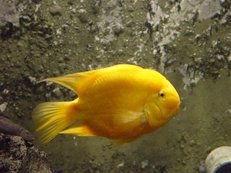 Google Images Fish | fish images google search colorful fishes pinterest