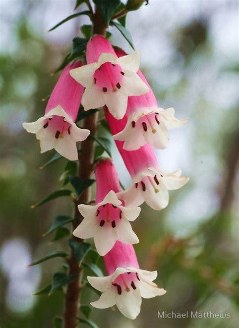 garden orchids and roses auf pinterest orchideen dfte 1553 besten flores lindas bilder auf pinterest orchideen