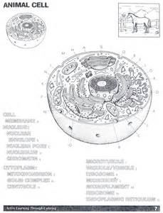 animal cell coloring answer key animal cell coloring page az coloring pages