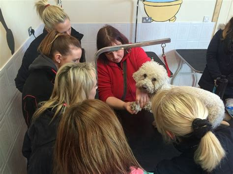 grooming courses grooming cork gentle grooming qualified staff creedons doggie day care