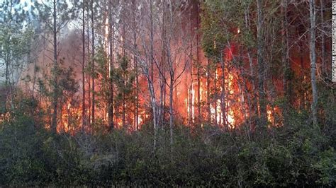 florida wildfires florida florida man burning books starts forest fire