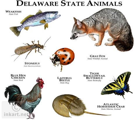 igbo names for animals west africa animal state animals of delaware line and color