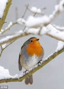 uk snow: britain braced for a white christmas   daily mail