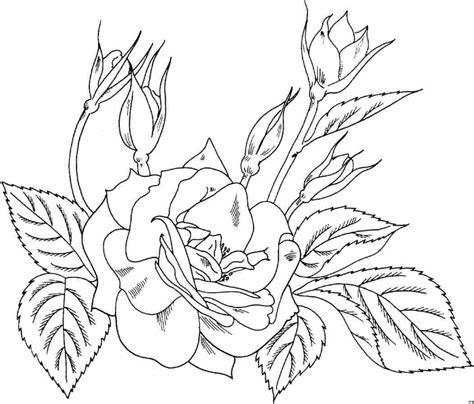 imagenes de rosas hermosas para dibujar rosas para dibujar rosas para dibujar