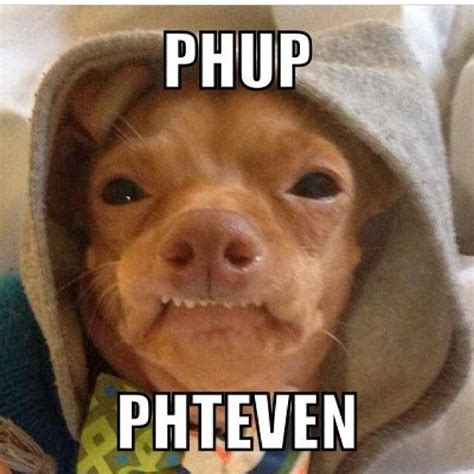 Phteven Dog Meme - 32 best images about phteven on pinterest the history