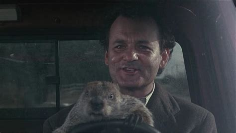groundhog day driving bill murray quotes marijuana quotesgram