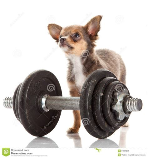 imagenes animales haciendo ejercicio im 225 genes para descargar gratis lindas y divertidas de