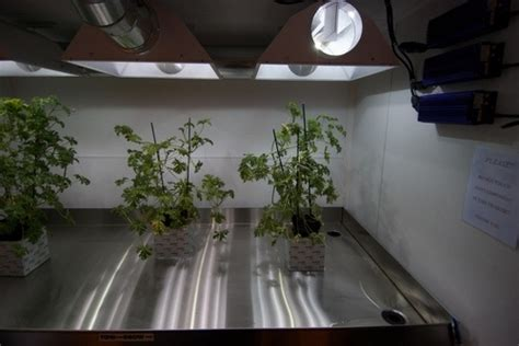 hydroponic grow room complete mobile hydroponics grow room trailer hydroponics hydroponics articles