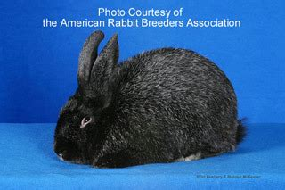 color my world tupelo ms rabbits for sale in mississippi mississippi rabbit