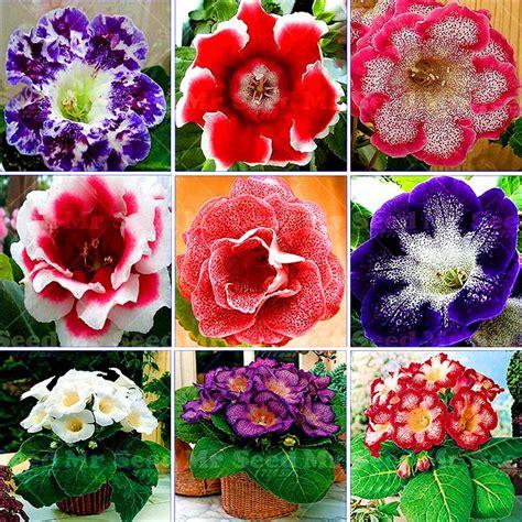 semi per fiori oltre 25 fantastiche idee su semi di fiori su