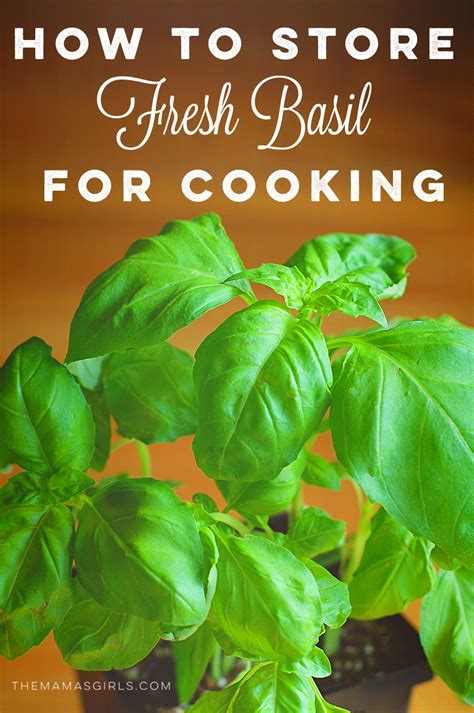 how to store fresh basil for cooking