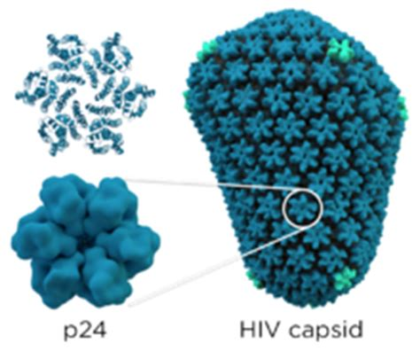 h protein define structure and genome of hiv