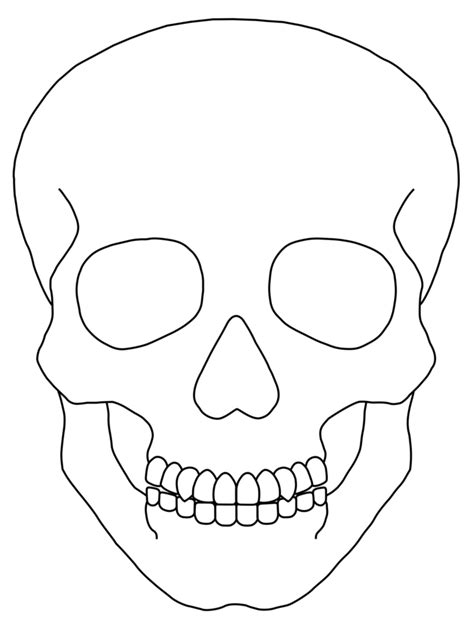 skull templates sugar skull clipart basic pencil and in color sugar