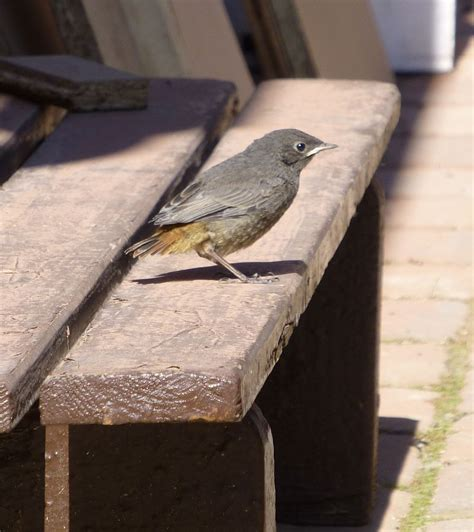 V Gel In Unserem Garten 3898 by Der Nachwuchs Lernt Fliegen