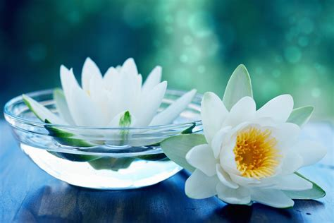 a fiori spa nature lotus water flowers bokeh spa wallpapers
