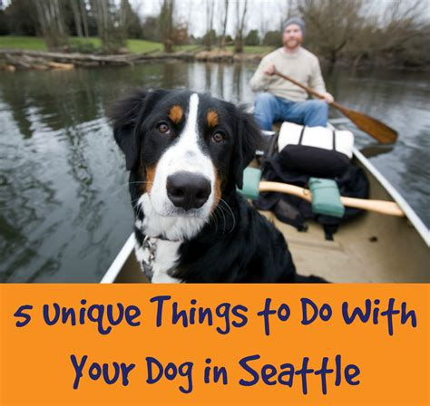 things to do with dogs 5 unique things to do with your in seattle