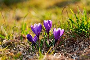 purple flowers growing out of the soil next picture from t flickr