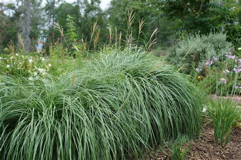 landscaping ideas grasses elliott brothers landscaping