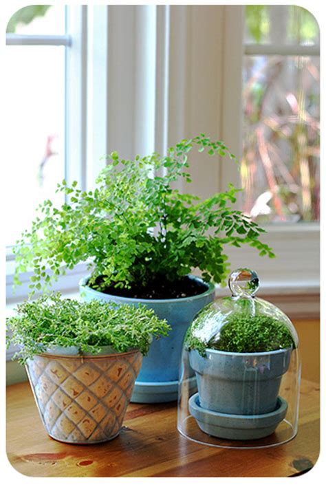 plants in home decor plants for home d 233 cor home plants indoor plants green