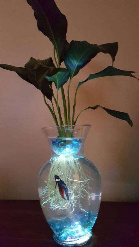 pin  rebecca medina  fish tank peace lily beta fish