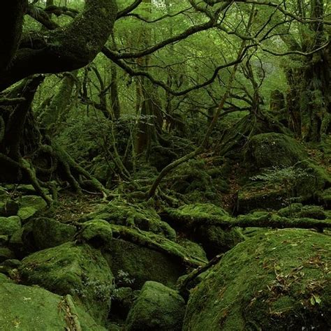 deep forest green lush deep green forest can i go here pinterest