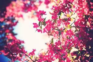 flower bloom download flowers bloom wallpaper 1920x1275 wallpoper 401906