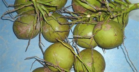 Minyak Kelapa Hijau menjaring impian jauh kelapa muda ni mari
