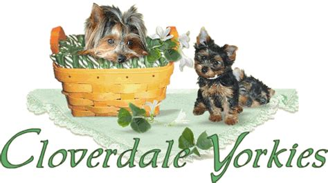 cloverdale yorkies cloverdale yorkies and almost heaven biewers health guarantee and puppy contract