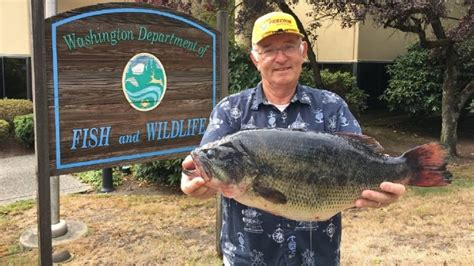 Record Washington State Mystery Tackle Box Mystery Tackle Box News Plus Fishing Tips And More