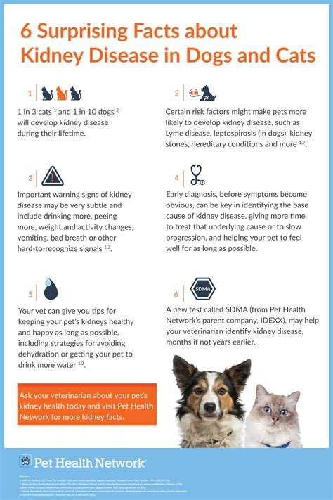 kidney failure in puppies infographic poster 6 surprising facts about kidney disease in cats and dogs