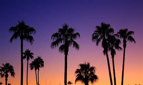 colorful palm trees colorful tropical palm tree sunset by bo insogna