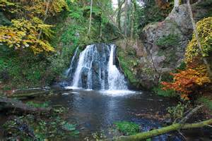 Flowers In Inverness - fairy glen rosemarkie walkhighlands