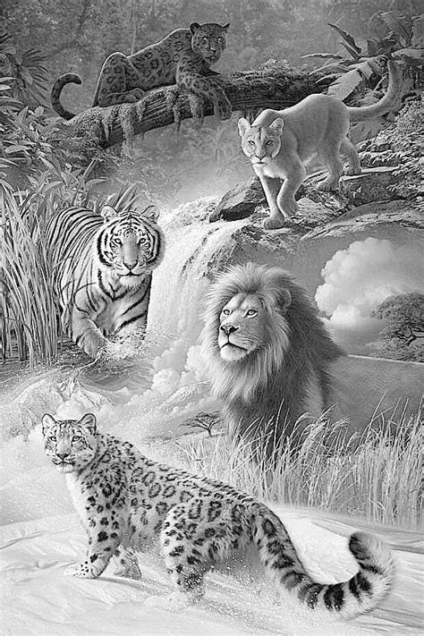 advanced tiger coloring pages 17 best images about coloring grayscale on pinterest