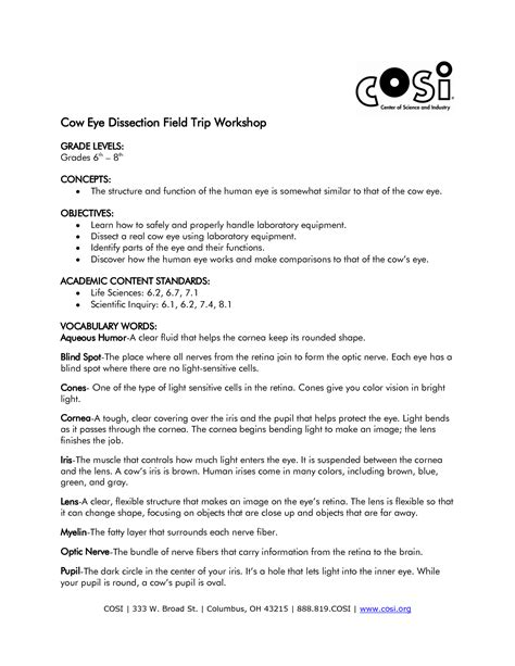 Cow Eye Dissection Worksheet Answers by 14 Best Images Of Eye Diagram Worksheet Human Eye