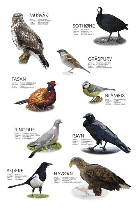 about birds in hindi language birds 01 no akuart gallery