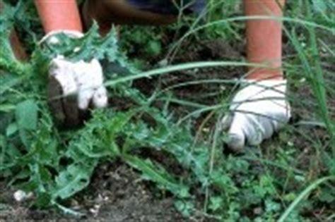 comment reconna 238 tre et 233 liminer 10 adventices au jardin