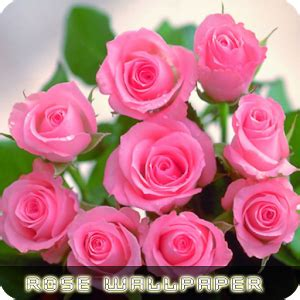 google images flower roses flower wallpapers v2 android apps on google play