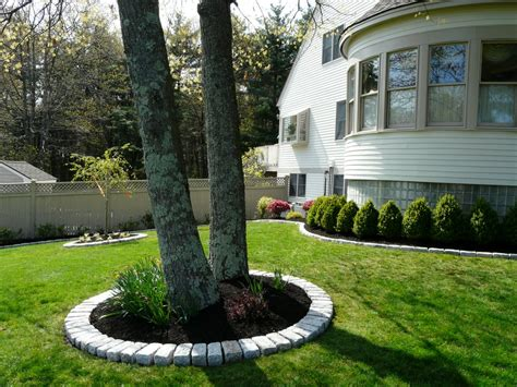 landscape around trees jumbo cobblestone border around tree installed by done right landscape yelp
