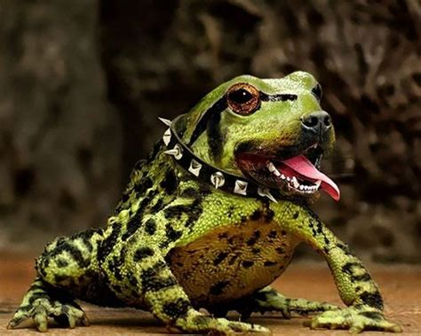frogs and dogs 199 best images about frogs on ceramics and frogs