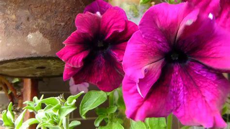 imagenes de flores que se mueven 2748 flores se mueven bruscamente con el viento raw