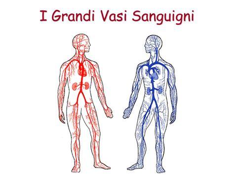 vasi sanguinei l apparato circolatorio ppt scaricare