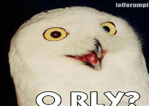 Meme Orly - orly owl memes