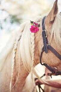hairstyles for horses 17 best images about horse hairstyles on pinterest horse