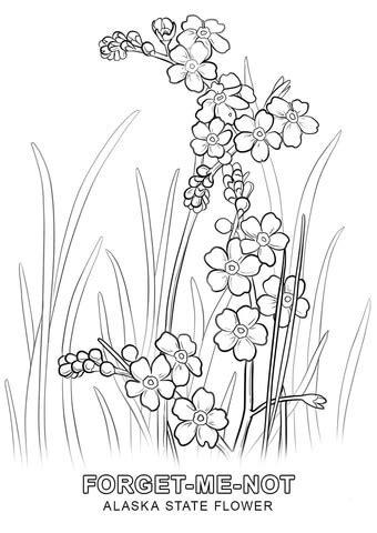 printable state flowers alaska state flower coloring page free printable
