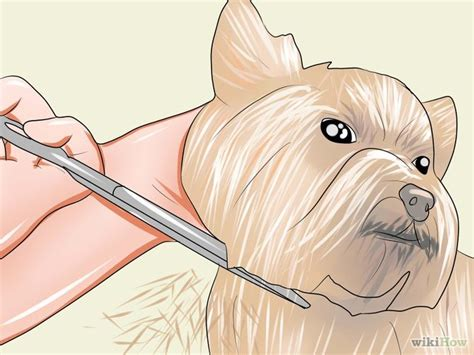 how to draw a yorkie puppy step by step artist workshop how to draw a yorkie puppy step by step walter breeds picture