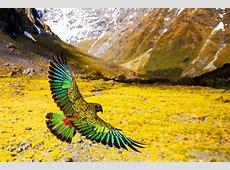 Η άγρια και πολυποίκιλη φύση της Νέας Ζηλανδίας | LiFO Lifo Gr